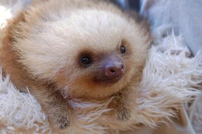 sloth 2